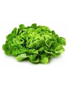Salade Feuille De Chene Blonde