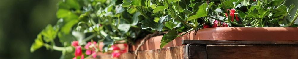 Pots, jardinières et carrés potagers